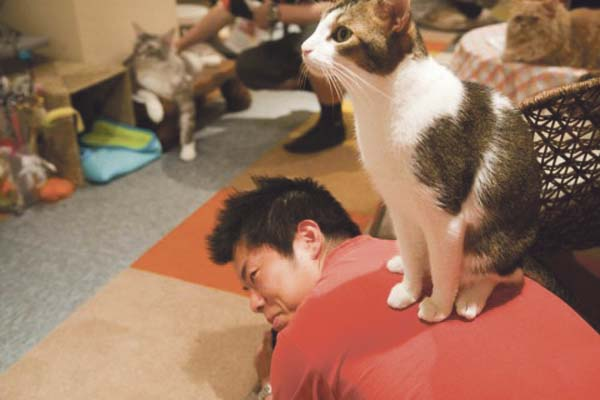 Cat+Cafe+1