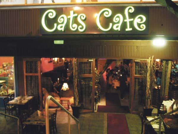 Cats-Main