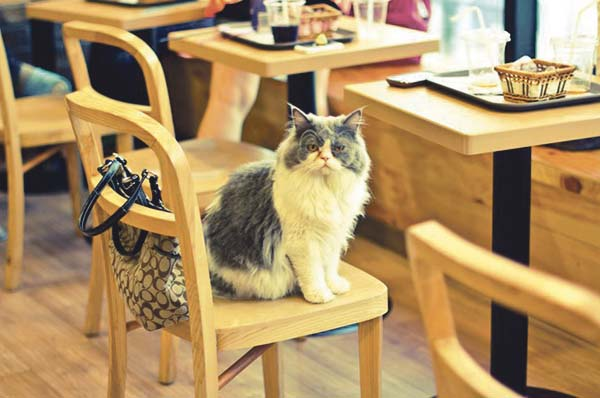 cat_cafe_cnt_21feb13_flickr_ceruleansky_b_646x430