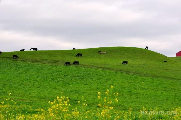 farmland-along-hwy3s-green-pastures-2